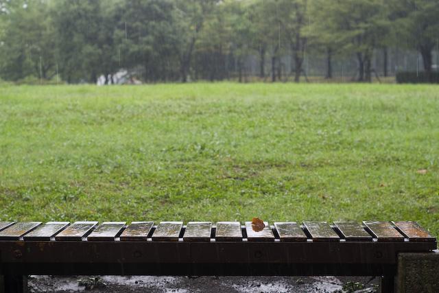 雨の日にお散歩。