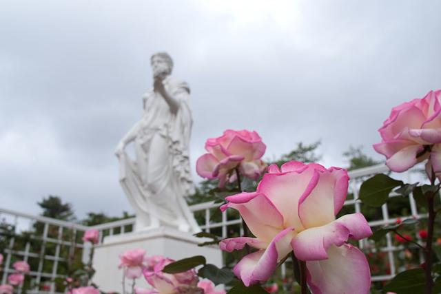 生田緑地の薔薇